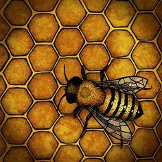honeybee on comb