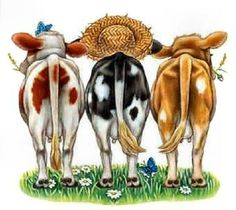 Line Up ~ cute cows