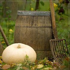 Old Pitchfork...Old Wood Barrel...White Pumpkin.
