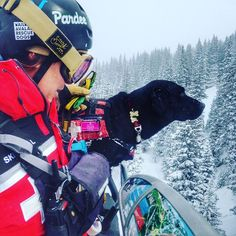 Meet The Cutest Rescuers On Ski Patrol: Avalanche Dogs