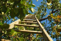 Más sobre los cuidados del jardín en abril  - http://www.jardineriaon.com/mas-sobre-los-cuidados-del-jardin-en-abril.html