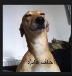 Funny Cartoon Quotes, Funny Study Quotes, Memes Funny Faces, Cute Memes, Funny Profile Pictures, Funny Reaction Pictures, Funny Pictures, Arabic Funny, Funny Arabic Quotes