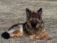 Best Dog Food For Heavy Coated Dogs