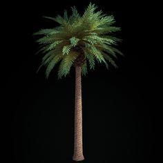 date palm tree 3d