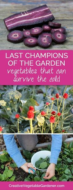 The garden season doesn't have to be over with the first frosts of the fall. These vegetables can survive, and even thrive, in the colder nights of late fall and early winter.