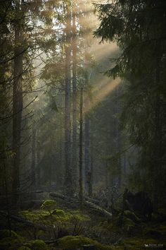 17 Ideas beautiful nature forest twilight for 2019 nature 850195235889504467 Dark Green Aesthetic, Nature Aesthetic, Forks Twilight, Forest Background, Twilight Pictures, Slytherin Aesthetic, Dark Forest, Foggy Forest, Night Forest