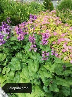 Elokuun kukkija Herbs, Plants, Herb, Plant, Planets, Medicinal Plants