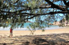 The Entrance to the Beach at Florence Bay, Magnetic Island is shaded by She Oak Trees.