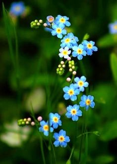 Forget-me-nots...we pass out seed packets of these for families and friends of Dementia and Alzheimer's folks....lovely idea!