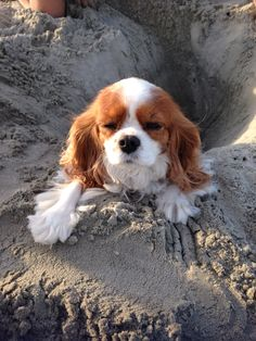 My dog got stuck!
