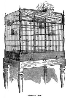 Free Vintage Bird Cage Clip Art Image | Oh So Nifty Vintage Graphics