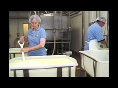 #goatvet likes this video showing how to make   Camellia, a French-style artisan goat cheese in commercial quantities - from Redwood Hill Farm