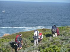 6-day hike across the Hope nature reserve, with Southern Whales jumping & swimming next to you | It's called the 'Whale Trail' for a reason @ South Africa