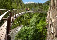 Tree Top Adventures - Vancouver, BC
