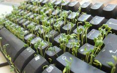 Green write