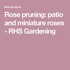 Rose pruning: patio and miniature roses - RHS Gardening