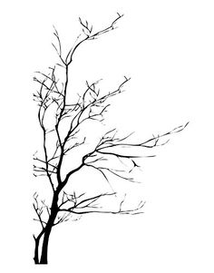 Bare Tree Branch Wall Decal Sticker by Stickerbrand 60in Tall X 35in Wide (BLACK). Easy to Apply and Removable. Made in the USA. #AC223s