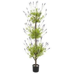 Found it at Wayfair - Lavender Round Topiary in Pot http://www.wayfair.com/daily-sales/p/Fuss-Free-Greenery%3A-Florals-%26-Topiaries-Lavender-Round-Topiary-in-Pot~TXN1387~E15593.html?refid=SBP.rBAZEVQZ6HCt9mzOPmkvAnnWR_1eFkvpm9U8GFkFfTE