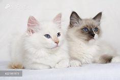 PortForLio - Two kittens