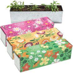 Odlingsset - Blooming Garden