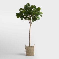 Lush and lifelike, this six-foot fiddle-leaf fig tree has broad leaves, poseable artificial branches and a sculptural silhouette that make a stylish statement Fake Trees, Potted Trees, Potted Plants, Fiddle Leaf Fig Tree, Plants Online, Real Plants, World Market, Artificial Plants, Houseplants