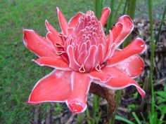 Costa Rica Flowers | Costa Rica is green and colorful with rain forest and all the flowers ...