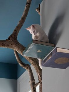 Cat wall perches made from wood bases and old books. - Romeow Cat Bistro http://www.catsonyards.com/product-category/beds-furniture/cats-scratchers/