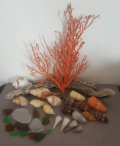 Buy Sea Shells & rare sea grass from Jeffreys Bay (cleaned handpicked) beach, driftwood, fish aqarium for Driftwood Fish, Sea Shells, Grass, Cleaning, Antiques, Beach, Home Decor, Antiquities, Antique