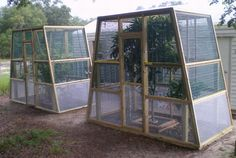 The Chameleon Company's outdoor harem cages.