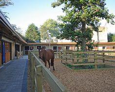 Ebony Horse Club, London