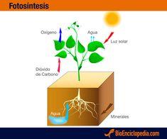 Fotosíntesis de las plantas