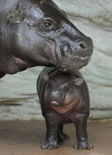 hippopotamus love ~ happy mama's day to the best mom ever! ♥ you