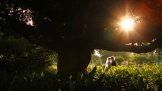 Bride & Groom + Dark Tree