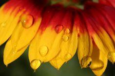 german colors in #nature #flowers