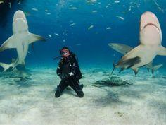 The Bahamas means sharks!