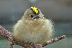 Fugleparadis.dk