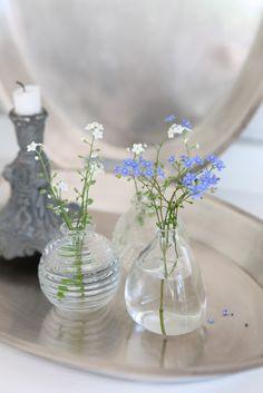 Forget me not Little Flowers, Small Flowers, Cut Flowers, My Flower, Beautiful Flowers, Flower Centerpieces, Flower Arrangements, Vases, Vase Transparent