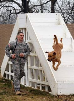 Spc. Joshua Duncan, of the 500th Military Police Detachment, Special Troops Battalion, guides specialized search dog Tan as the military working dog flies through obstacles during his annual certification Feb. 4 at the K-9 kennels.