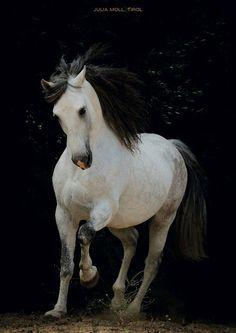 Julia Moll Pferdefotografie