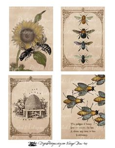 Vintage Bees Printable Images Digital Download