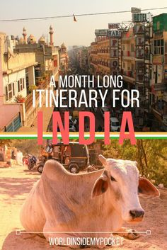 Click to read my guide to a month long trip in India! Here's my Itinerary and other recommendations.
