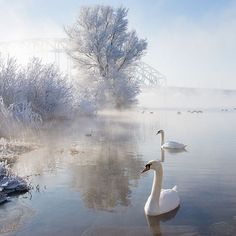 Icy Swan Lake by Edwin van Nuil This fantastic shot by Edwin captures perfectly a cold and bright winter's morning. The touch of blue in the sky and the orange of the swan's beak stand out all the. Beautiful Swan, Beautiful Birds, Animals Beautiful, Beautiful Life, Winter Photography, Landscape Photography, Levitation Photography, Exposure Photography, Photography Awards