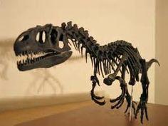 Allosaurus Skeleton - Bing Images