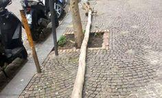 Vomero, cade un albero in via Scarlatti   Roma