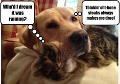 Funny animals of the hour – 10 pics