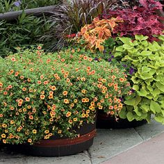 Calibrachoa - Spectacular Container Gardening Ideas - Southern Living