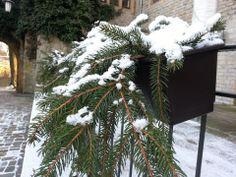 Plantas e neve combinação perfeita.