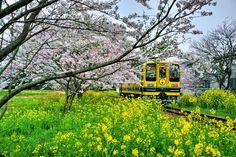 木本 建二鉄道風景写真館 フォローする · 4月7日 ·     春のいすみ鉄道 総元駅付近