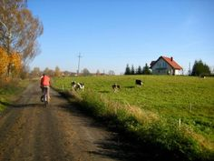 View of the Polish countryside while pedaling along gravel back roads to Malbork