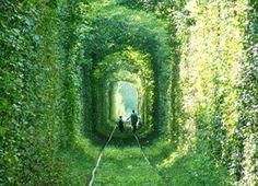 まるでジブリ!世界一ロマンチックなトンネル『恋のトンネル』が美しい - NAVER まとめ